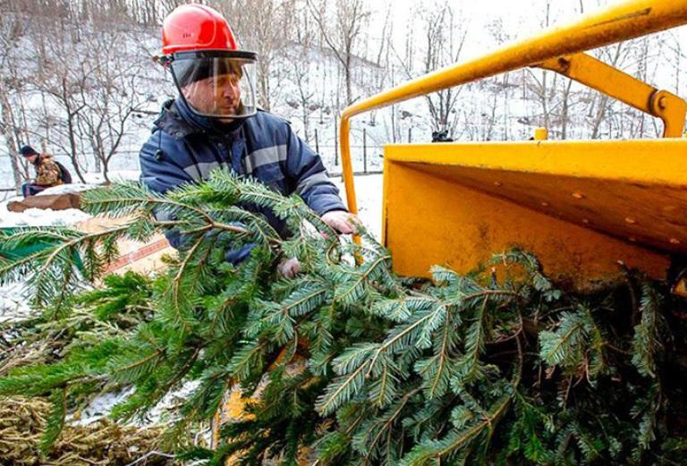 Определено место для утилизации новогодних сосен